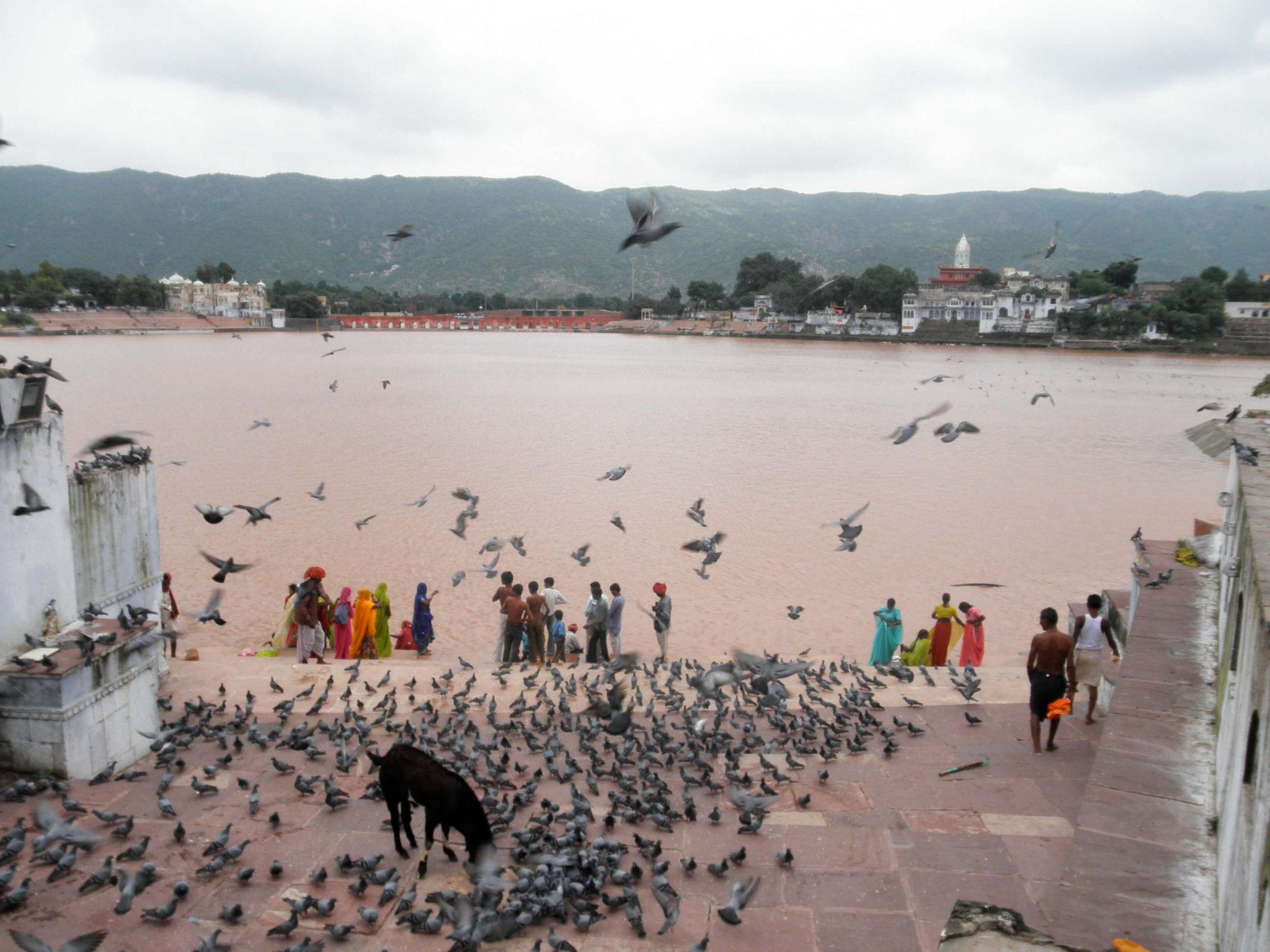 'Laura's' – Un 'chill-out' En Pushkar (India)