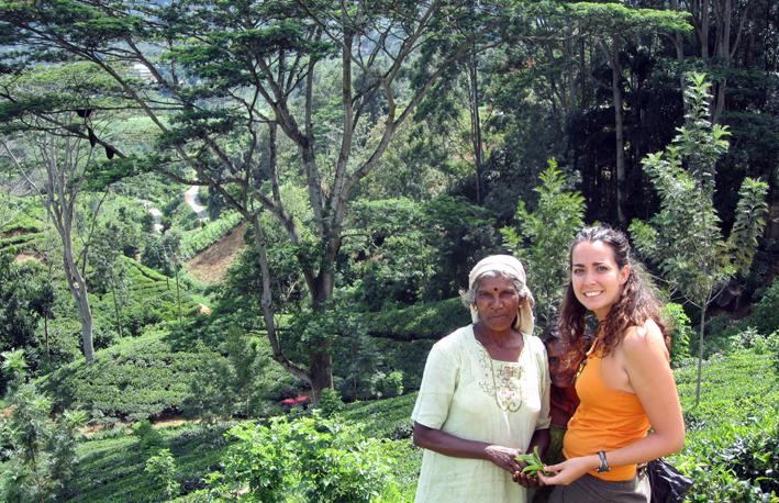 ¿Cuál Es El Mejor Té? Sri Lanka, Inglaterra, India, Marruecos…
