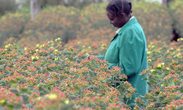 Entre Rosas Y Tribus. Hablamos De Kenia