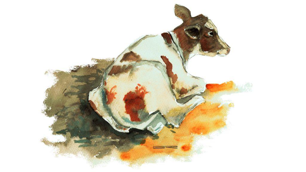 vaca acuarela